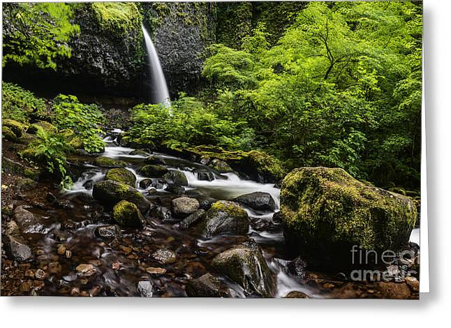 Ponytail Greeting Cards - PonyTail Falls Columbia River Gorge Greeting Card by Vishwanath Bhat