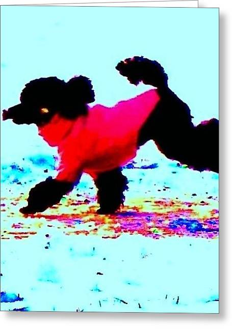 Sweating Greeting Cards - Poodle in winter Greeting Card by Hilde Widerberg