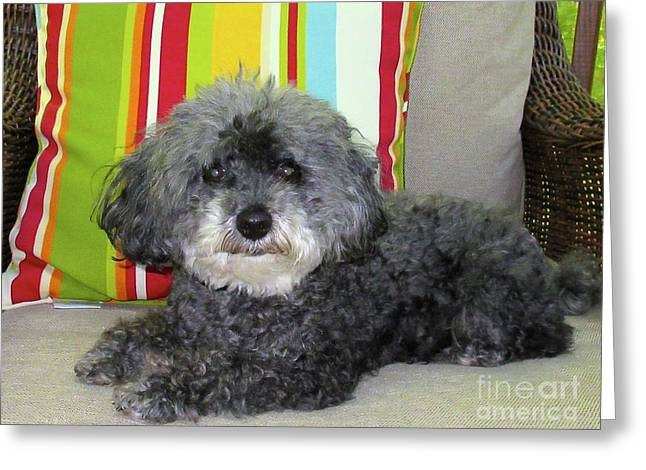 Dawgart Photographs Greeting Cards - Poodle Love Greeting Card by Lynn R Morris