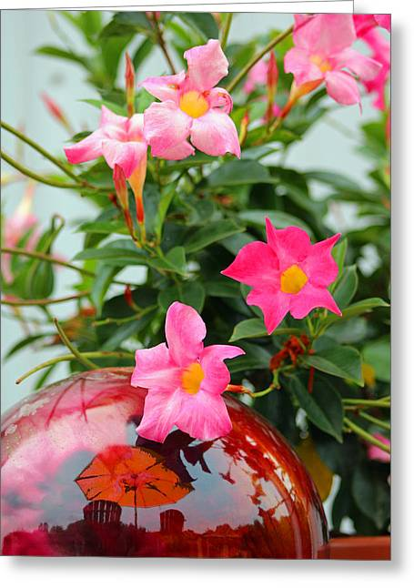 Get Well Card Framed Prints Greeting Cards - Pool Side Flowers Greeting Card by Lorna Rogers Photography