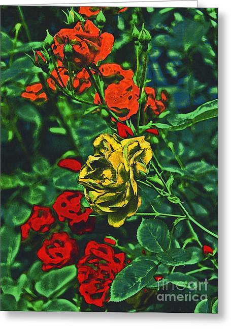 Child Care Mixed Media Greeting Cards - Pop Roses by jrr Greeting Card by First Star Art
