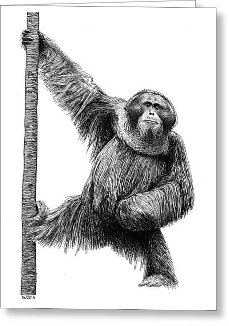 Orangutan Drawings Greeting Cards - Popeye Greeting Card by Scott Woyak
