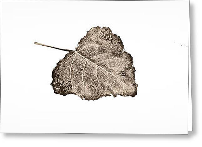 Poplar Leaf Fade To Black And White Greeting Card by Greg Jackson