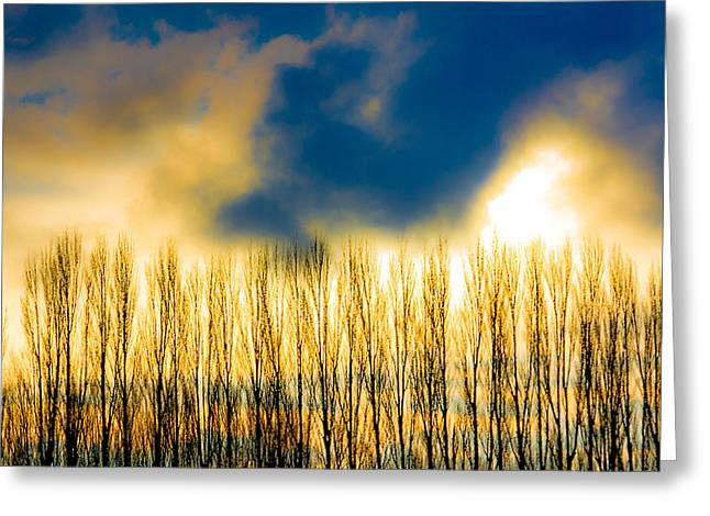 Sunset Greeting Cards Greeting Cards - Poplar Sunset Greeting Card by Julie Craig