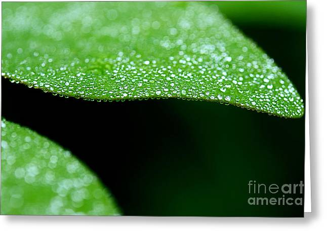 Dewdrops Greeting Cards - Poplar Tree Abstract Greeting Card by Michael Eingle