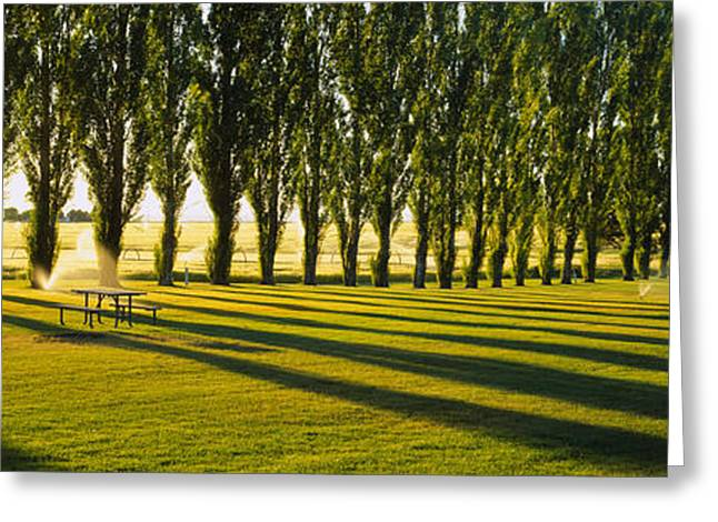 Repetition Greeting Cards - Poplar Trees Near A Wheat Field, Twin Greeting Card by Panoramic Images