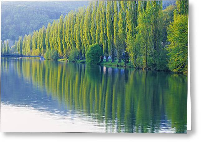 Tree Lines Greeting Cards - Poplar Trees On River Aare, Near Canton Greeting Card by Panoramic Images