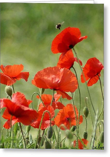 Floral Greeting Cards - Poppies 1 Greeting Card by Carol Lynch