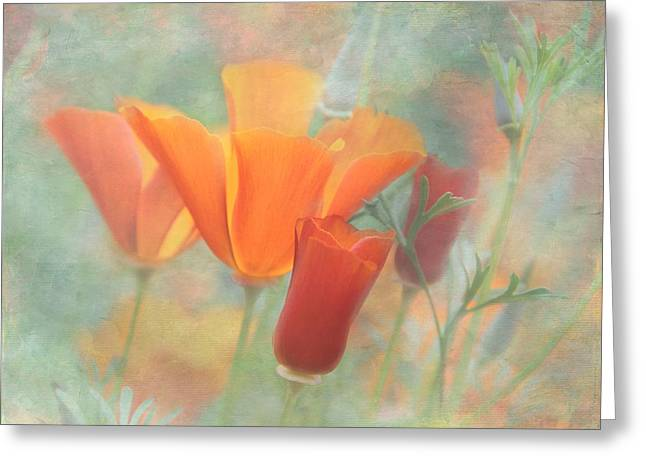 Enhanced Greeting Cards - Poppies AFTER Greeting Card by Angie Vogel