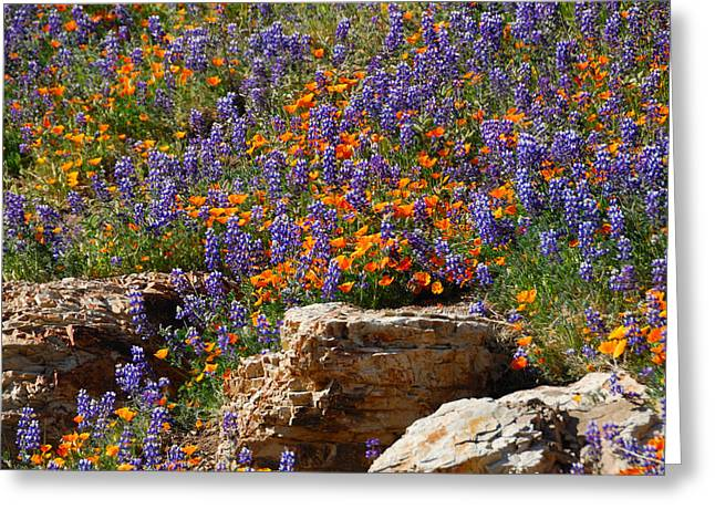 Recently Sold -  - Ventura California Greeting Cards - Poppies and Lupines on the Rocks Greeting Card by Lynn Bauer