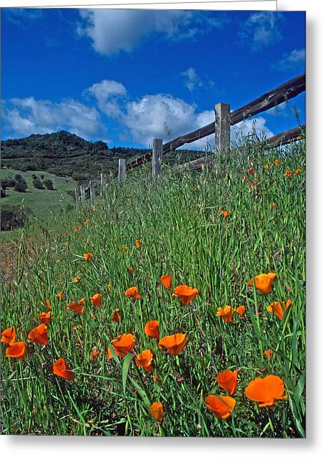 Landscape Framed Prints Greeting Cards - Poppies and the Fence Greeting Card by Kathy Yates