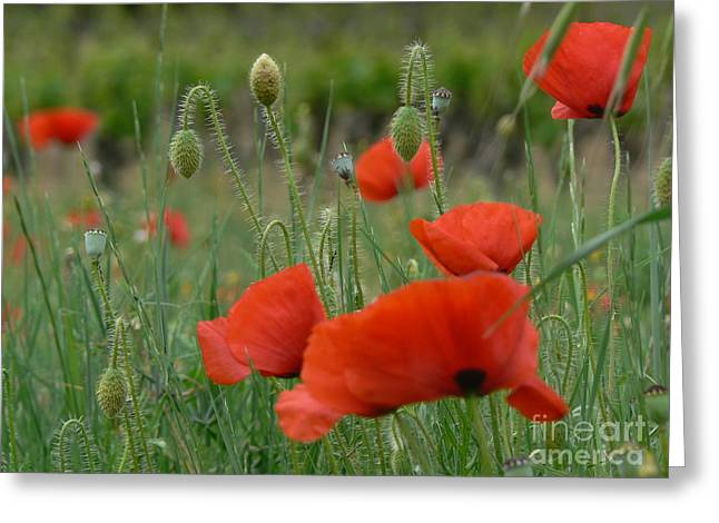 Wine Tour Greeting Cards - Poppies and Vines Greeting Card by France  Art