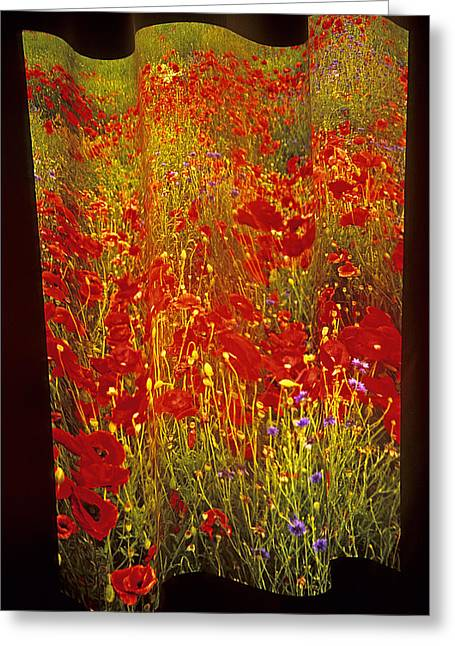 Warp Greeting Cards - Poppies and Wildflowers Greeting Card by Doug Davidson