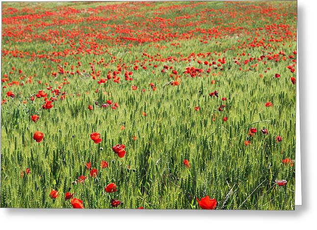 Lanscape Greeting Cards - Poppies at the fields Greeting Card by Guido Montanes Castillo
