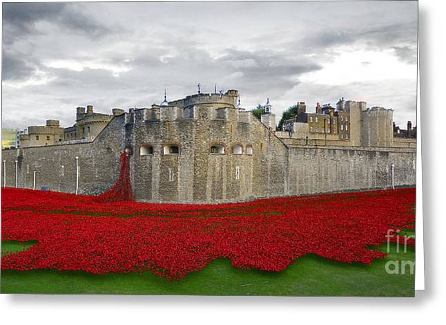 Cummins Greeting Cards - Poppies At The Tower Of London Greeting Card by J Biggadike