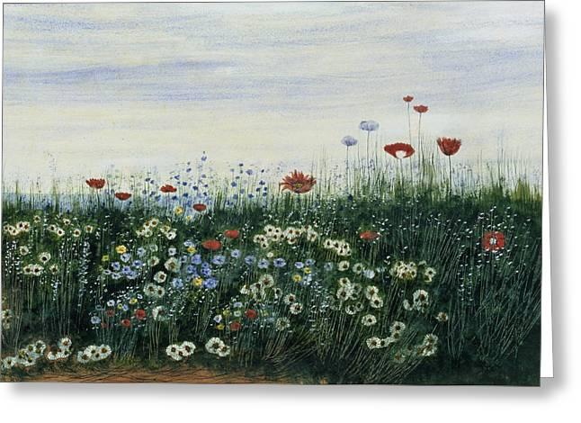 Poppies, Daisies And Other Flowers Greeting Card by Andrew Nicholl