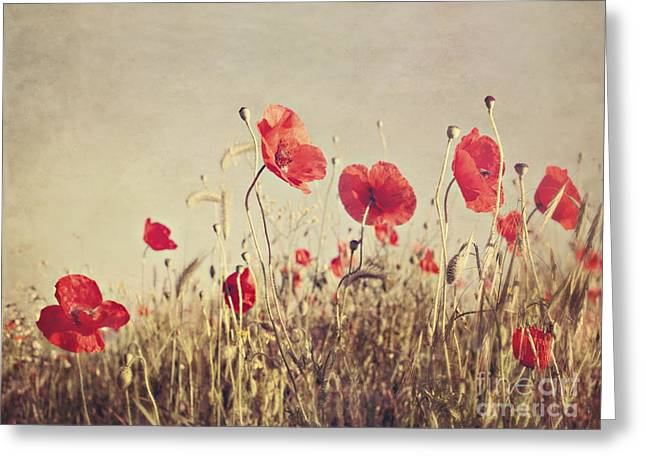 Fine Photography Digital Greeting Cards - Poppies Greeting Card by Diana Kraleva