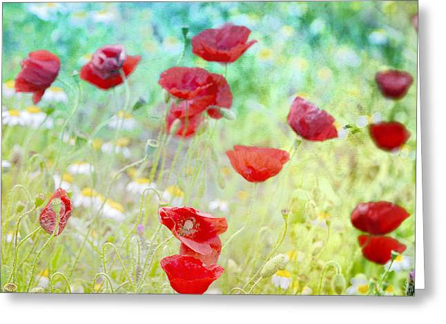 Poppy Photo Greeting Cards - Poppies dreams Greeting Card by Guido Montanes Castillo