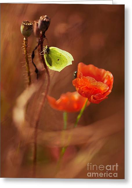Poppies Impression Greeting Card by Jaroslaw Blaminsky