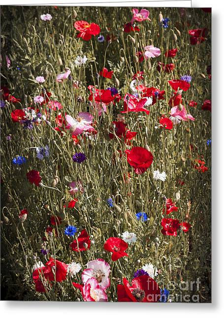 Various Greeting Cards - Poppies in garden Greeting Card by Elena Elisseeva