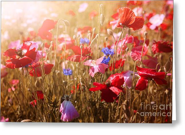 Various Greeting Cards - Poppies in sunshine Greeting Card by Elena Elisseeva