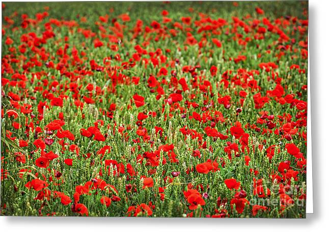 Remembering Greeting Cards - Poppies in wheat Greeting Card by Elena Elisseeva