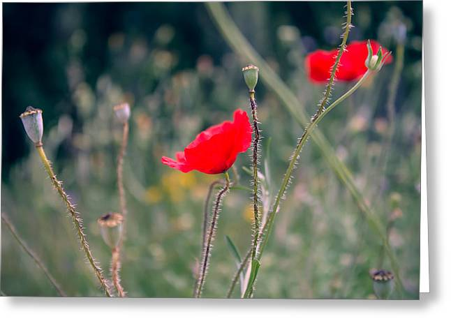 Poppies Greeting Card by Jane M