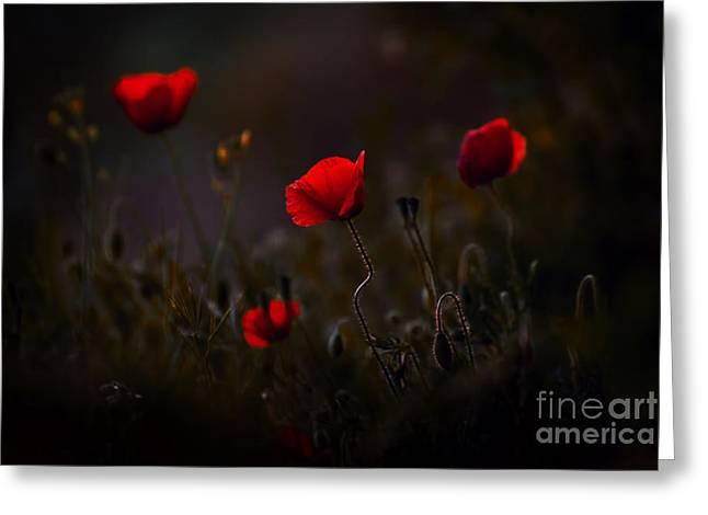 Poppies Greeting Card by Jaroslaw Blaminsky