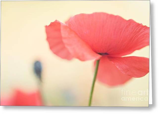 Poppies Greeting Card by Kim Fearheiley