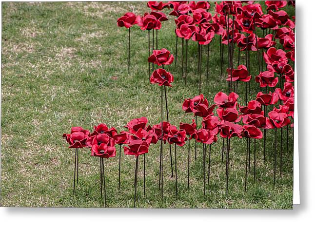 Ww1 Greeting Cards - Poppies Greeting Card by Martin Newman