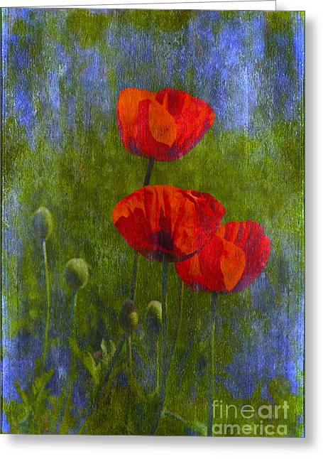 Poppies Home Decor Greeting Cards - Poppies Greeting Card by Veikko Suikkanen