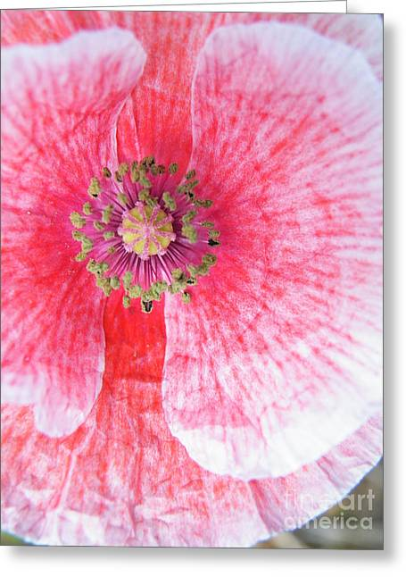 Ly Greeting Cards - Popping Greeting Card by Brian Boyle