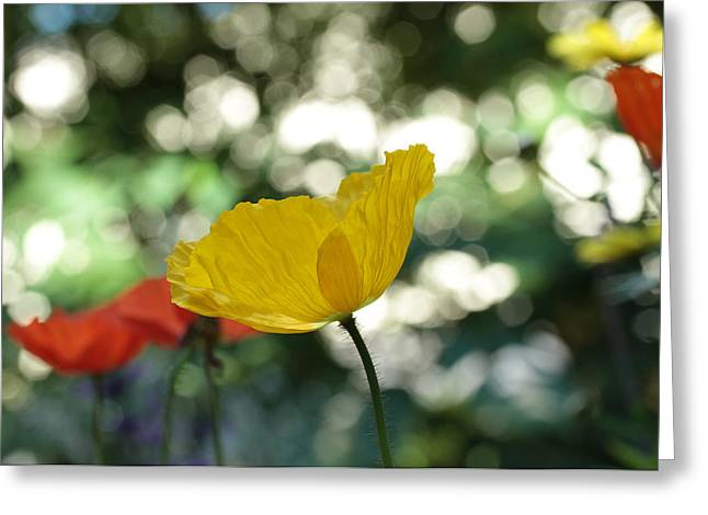 Dancing Petals Greeting Cards - Poppy At The Discoteque Greeting Card by Connie Handscomb