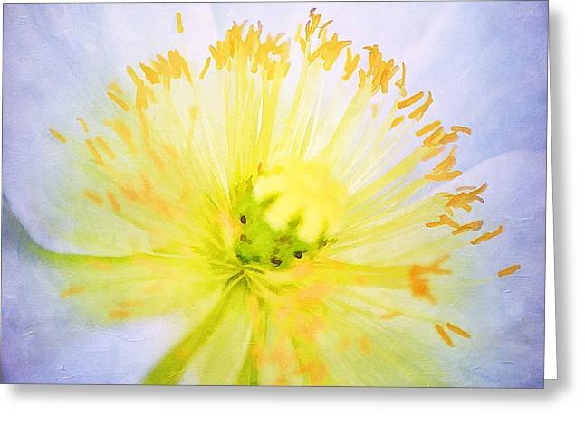 Poppy Close Up Greeting Card by Darren Fisher