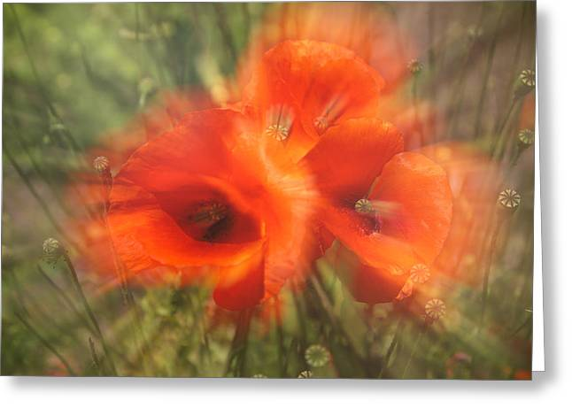 A Sunny Morning Greeting Cards - Poppy Craze Greeting Card by Nomad Art And  Design