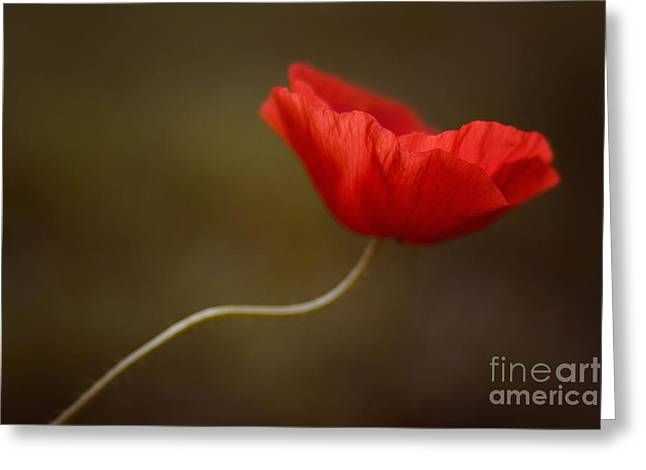 Office Design Greeting Cards - Poppy Greeting Card by Diana Kraleva