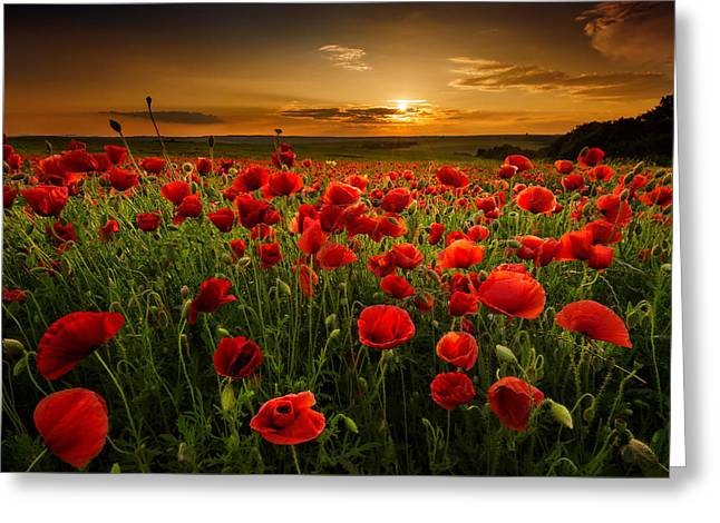 Field. Cloud Greeting Cards - Poppy field at sunset Greeting Card by Evgeni Ivanov