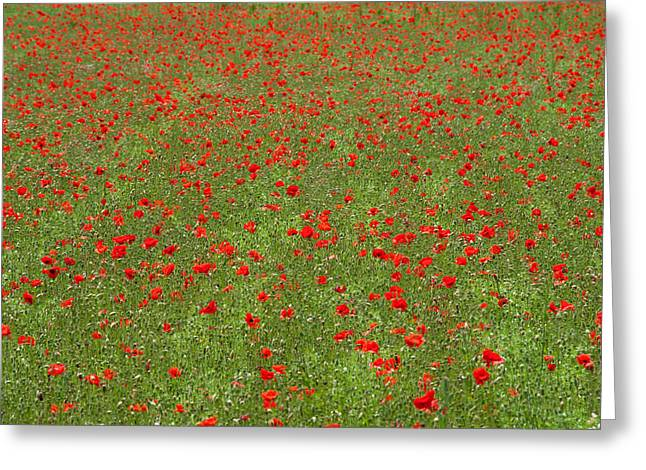Poppy Field In Bloom, Les Gres, Sault Greeting Card by Panoramic Images