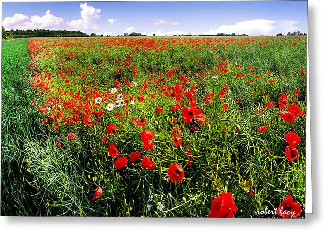 Fyn Greeting Cards - Poppy Field Greeting Card by Robert Lacy