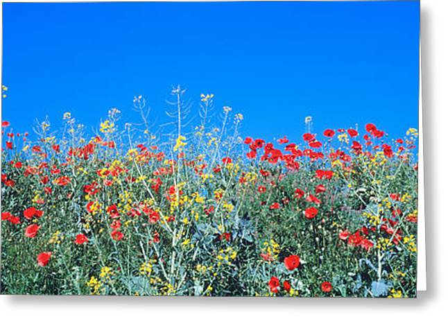 Blooms Greeting Cards - Poppy Field Tableland N Germany Greeting Card by Panoramic Images