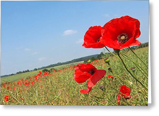 """battle Field"" Greeting Cards - Poppy Fields 2 Greeting Card by Gill Billington"