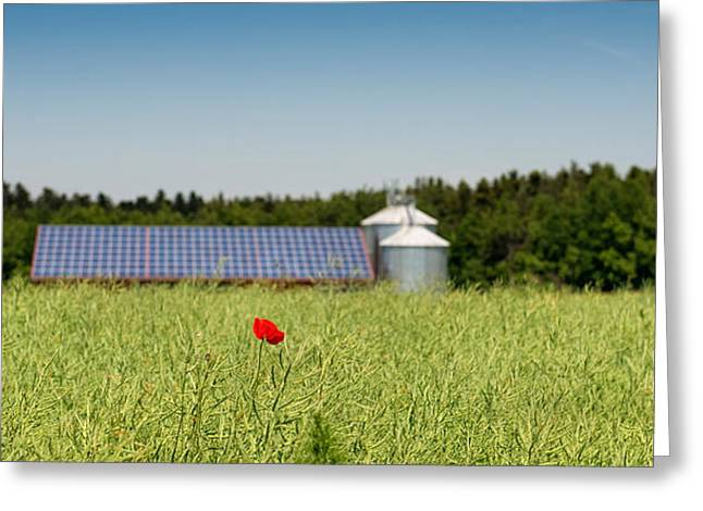Alternative Energy Greeting Cards - Poppy Flower In A Field And Barn Greeting Card by Panoramic Images