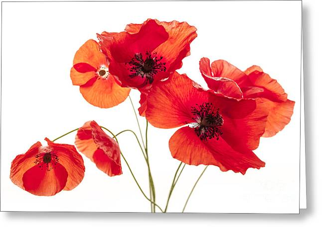 Cutouts Greeting Cards - Poppy flowers  Greeting Card by Elena Elisseeva