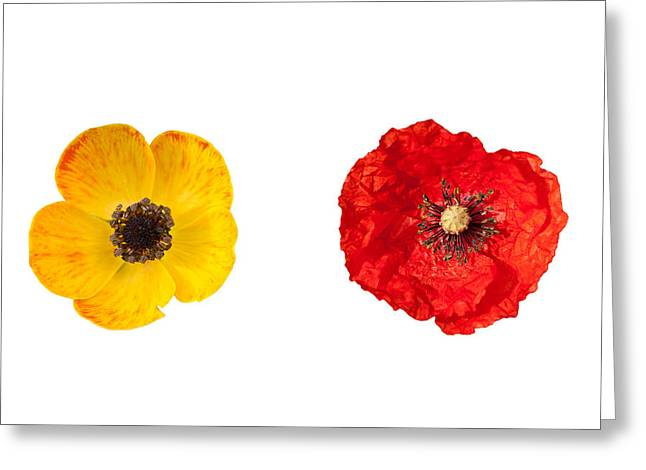 Flower Design Greeting Cards - Poppy flowers Greeting Card by Michalis Ppalis