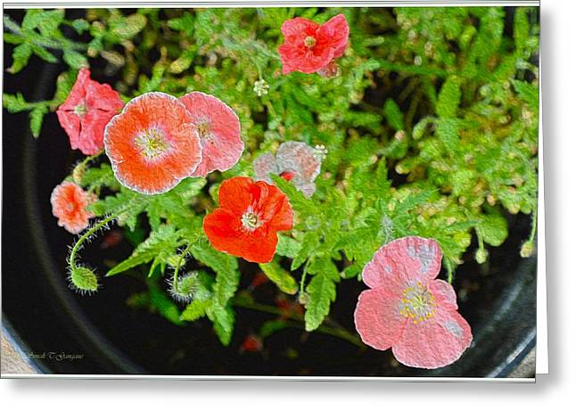 Occasion Greeting Cards - Poppy Flowers Greeting Card by Sonali Gangane
