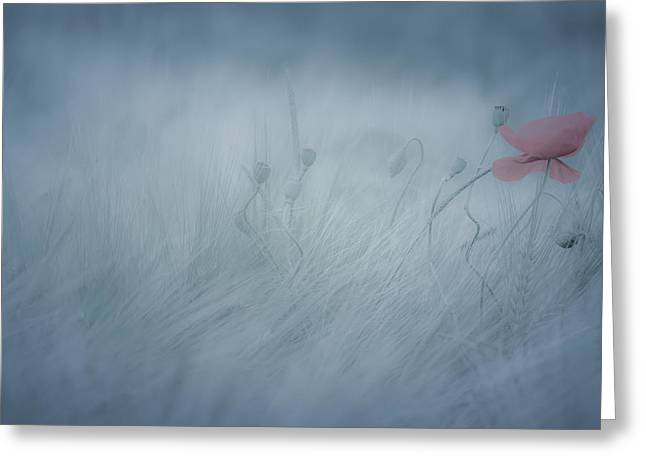 Lonly Greeting Cards - Poppy in the mist Greeting Card by Annette Hanl