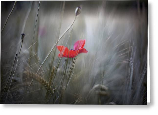Renata Vogl Greeting Cards - poppy IV Greeting Card by Renata Vogl