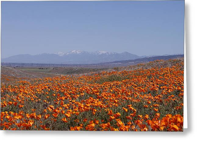 Lancaster Fine Arts Greeting Cards - Poppy Land Greeting Card by Ivete Basso