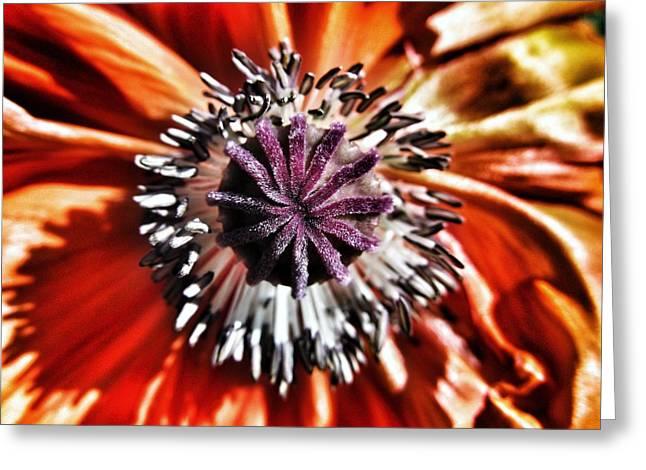 Poppy - Macro Fine Art Photography Greeting Card by Marianna Mills