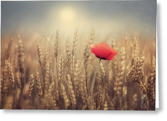 Summer Wheat Greeting Cards - Poppy Greeting Card by Magda  Bognar